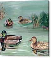 Sanctuary For Ducks Canvas Print