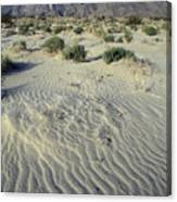 Sand Dunes And San Ysidro Mountains Canvas Print