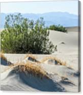 Sand Dunes, Plants, Mountains Canvas Print