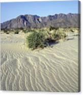 Sand Dunes & San Ysidro Mountains At El Canvas Print