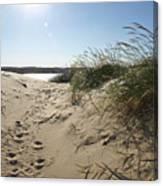 Sand Tracks Canvas Print