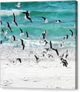 Sandestin Seagulls B Canvas Print