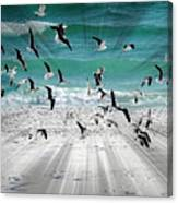 Sandestin Seagulls C Canvas Print