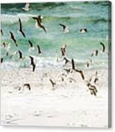 Sandestin Seagulls D Canvas Print