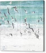 Sandestin Seagulls E Canvas Print
