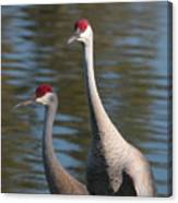 Sandhill Crane Couple By The Pond Canvas Print