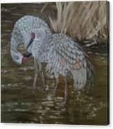Sandhill Crane Couple Canvas Print