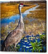 Sandhill Crane In The Glades Canvas Print