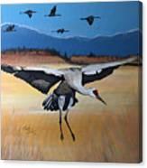 Sandhill Crane Landing  Canvas Print