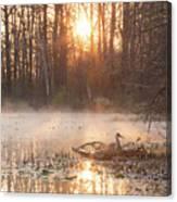 Sandhill Crane On Nest Canvas Print