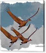Sandhill Cranes 3 Canvas Print