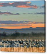 Sandhill Cranes And Snow Geese Canvas Print