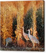 Sandhill Cranes At Sunrise Canvas Print