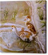 Sandhill Cranes Chicks First Bath Canvas Print