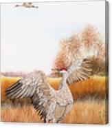 Sandhill Cranes-jp3161 Canvas Print