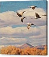 Sandhill Cranes over Bosque del Apache Wildlife Refuge, New Mexico Canvas Print