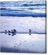 Sandpiper Beach I Canvas Print