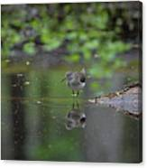 Sandpiper In The Smokies Canvas Print