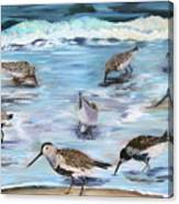 Sandpiper Party Canvas Print