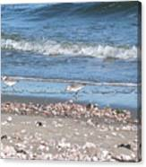 Sandpipers At The Seashore Canvas Print