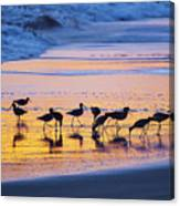 Sandpipers In A Golden Pool Of Light Canvas Print