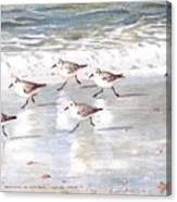 Sandpipers On Siesta Key Canvas Print