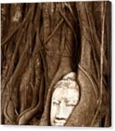 Sandstone Buddha Head Overgrown By Banyan Tree Thailand Canvas Print