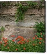 Sandstone Lilies Canvas Print