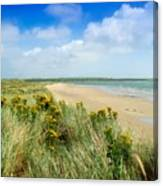 Sandunes At Fethard, Co Wexford, Ireland Canvas Print