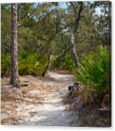 Sandy Path In Hunting Island South Carolina Canvas Print