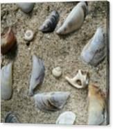Sandy Seashells Canvas Print