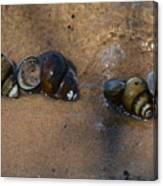 Sandy Shells Canvas Print