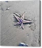 Sandy Star Canvas Print