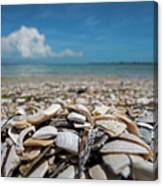 Sanibel Island Sea Shell Fort Myers Florida Broken Shells Canvas Print