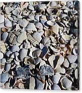 Sanibel Island Seashells I Canvas Print