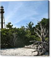 Sanibel Light And Driftwood Canvas Print