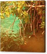 Sanibel Mangroves Canvas Print