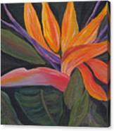 Santa Barbara Bloom Canvas Print