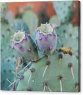 Santa Fe Prickly Pear Cactus Canvas Print