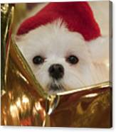 Santa Paws Canvas Print