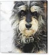 Santorini Dog Canvas Print