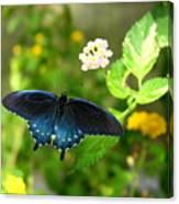 Sapphire Swallowtail Canvas Print