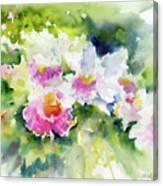 Sarasota Orchids Canvas Print