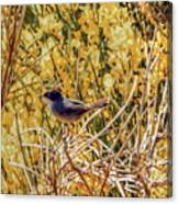 Sardinian Warbler Canvas Print