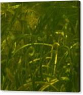 Sargasso Sea Canvas Print