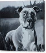 Sasha - The Third  Canvas Print