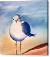 Sassy Seagull Canvas Print