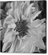 Satin Flora Bw Canvas Print