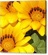 Satin Yellow Florals Canvas Print