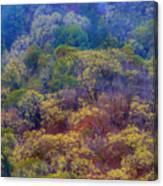 Saturated Forest Canvas Print
